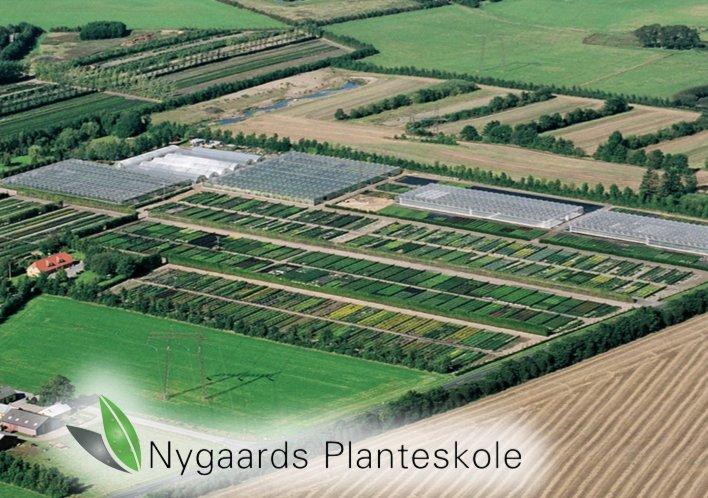 Nygaard Planteskole