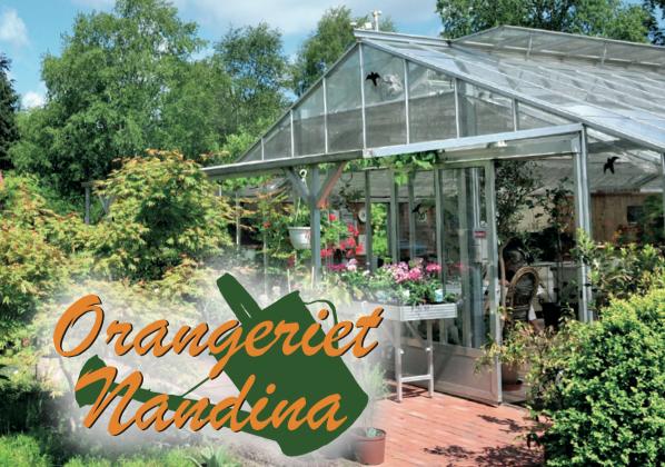 Orangeriet Nandina
